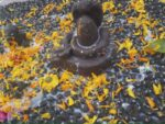 partheshwar pujan in mamaleshwar omkareshwar